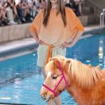 I love Ponys