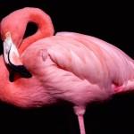ws_Flamingo_posing_1600x1200
