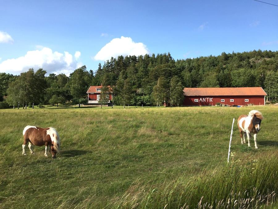 schweden-roadtrip-pferde