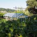 Das Gewächshaus – auch Wassermelonen werden im Garten angebaut.