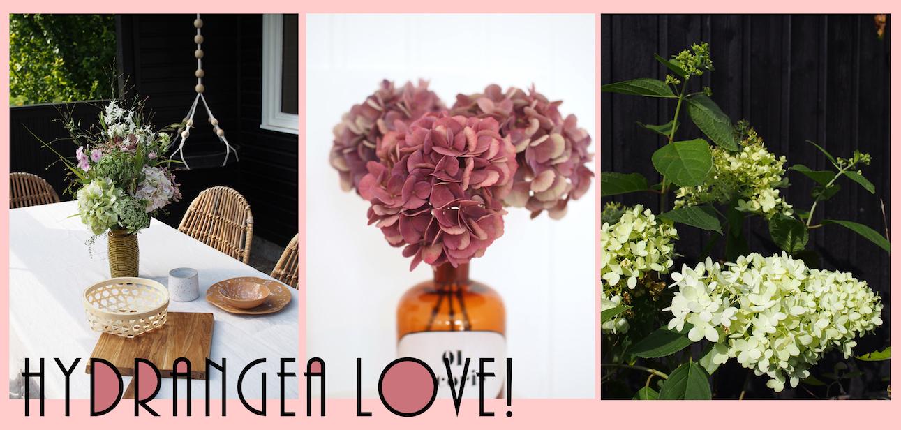 iloveponysmag-schrebergarten-hortensien