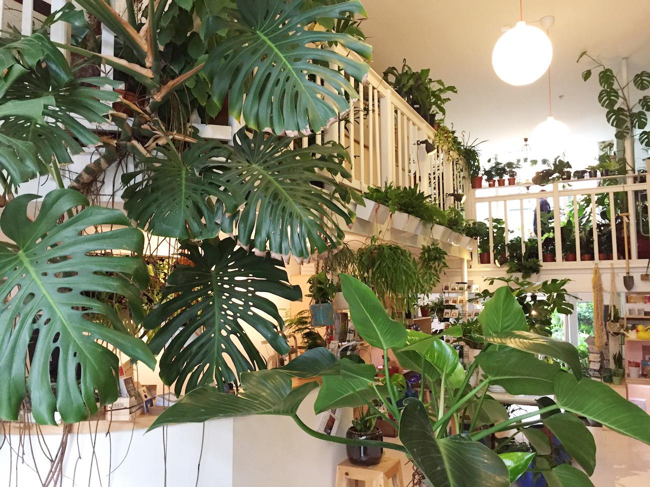 Rottrdam-Pflanzenstore-Steg